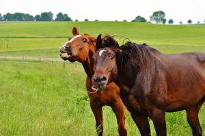 horses-1427230_1920