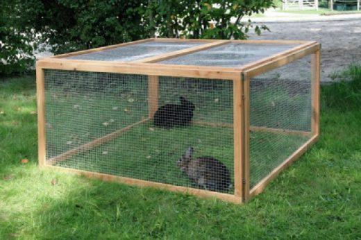 tarc pentru iepuri