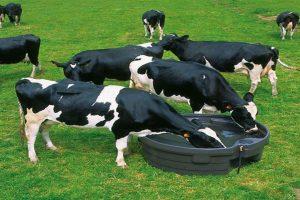 adapatoare rotunda pasune vaci