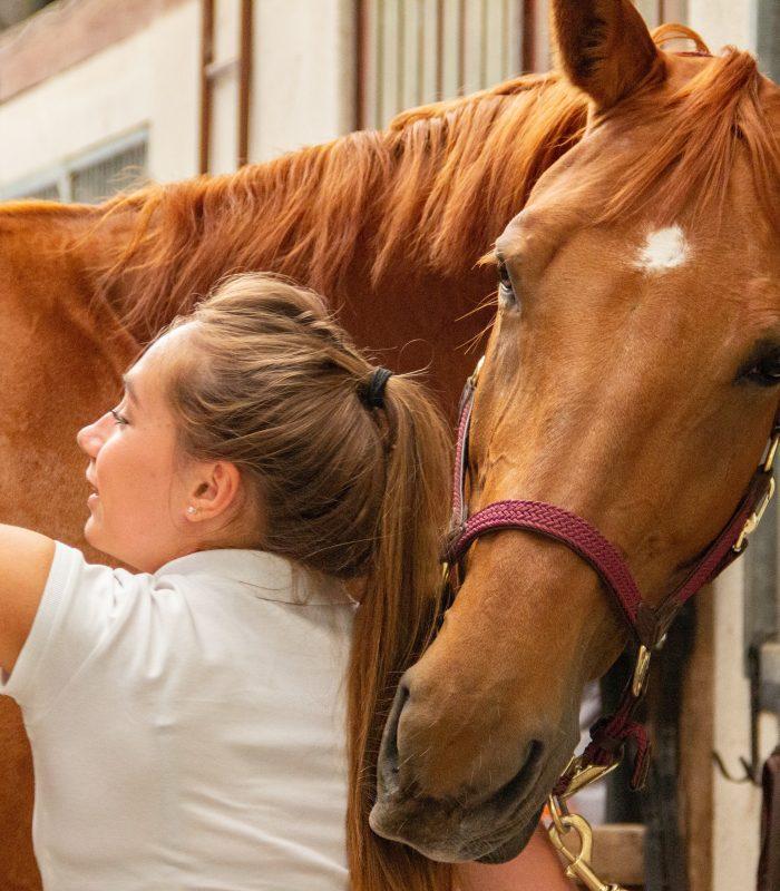 produse ingrijirea cailor